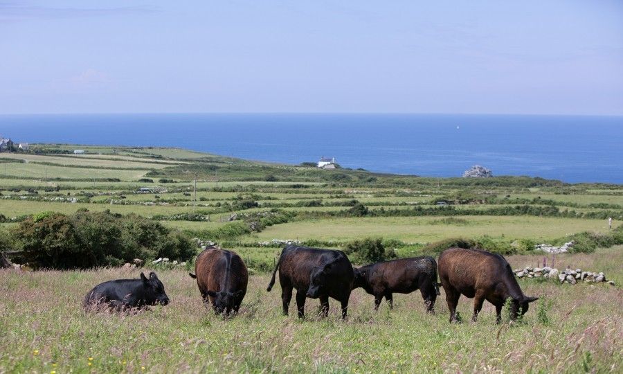 Farm of Aberdeen Angus breeders, the Pilchers