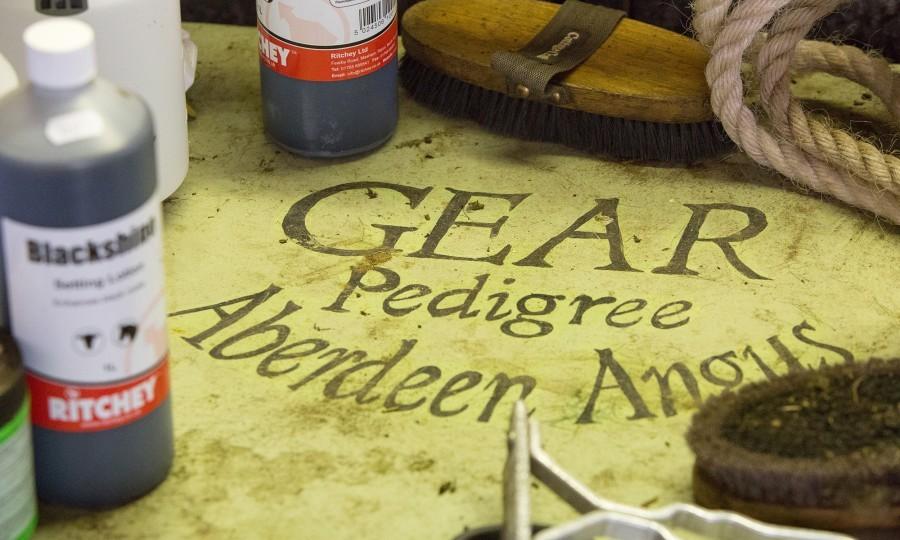 Aberdeen Angus equipment at Gear Farm, Cornwall